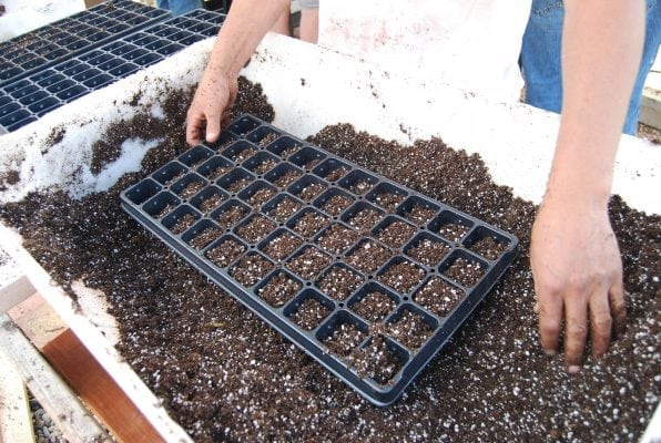 Preparing Trays for Hemp Seeds