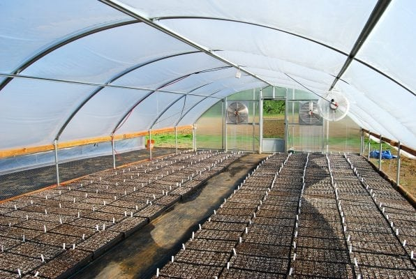 Hemp Seed Filled Hoop Houses